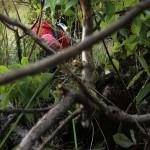 Majka climbing through the first crux: a tree.