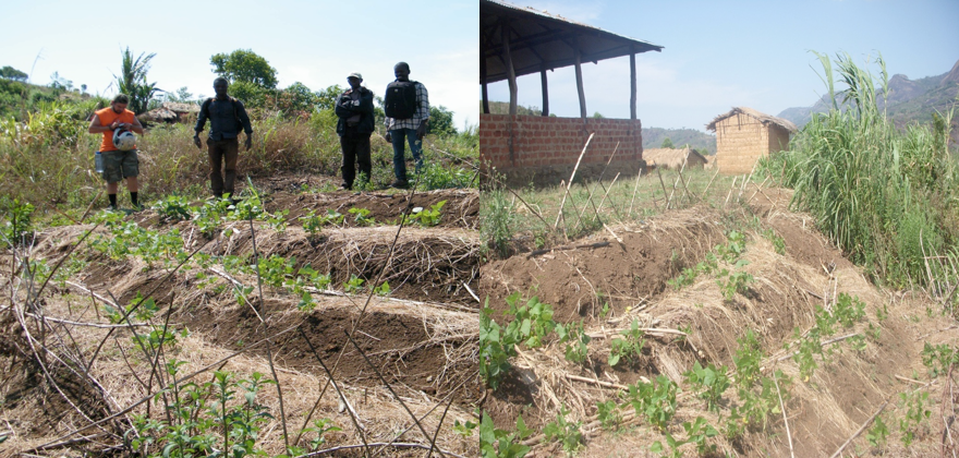 Conservation agriculture in Field Farmer School in the Murabué community.